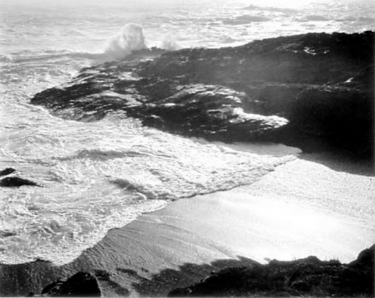 Edward Weston. Point Lobo Picture1
